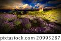 Castle towering 9ver lavender fields 20995287