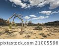 clouds, desert, sky 21005596