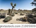desert, sky, tree 21005609