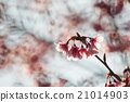 blurred background 21014903