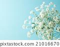 파란색 배경과 레이스 꽃 21016670