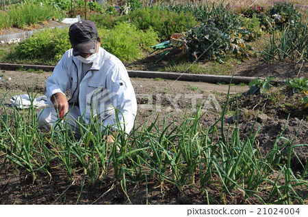 텃밭에 잡초를 수석 남성 21024004