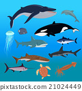 Marine Fauna Set of Aquatic Animals 21024449