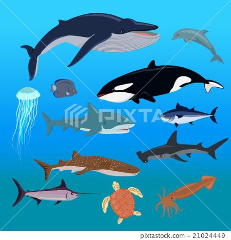 Marine Fauna Set of Aquatic Animals 21024449