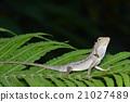 chameleon, one 21027489