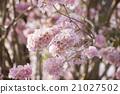 Spring flower soft focus 21027502