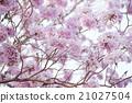 Spring flower soft focus 21027504