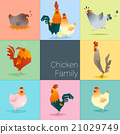 Set of chicken family 21029749