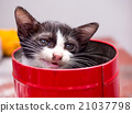 Black and white kitten in red bucket with bokeh 21037798