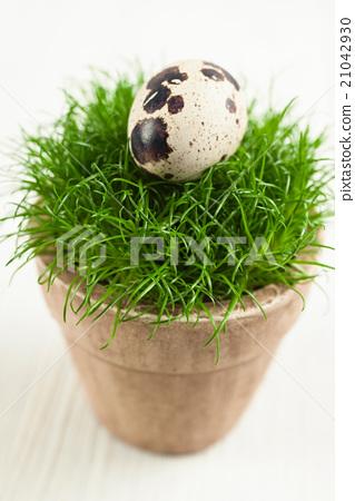 Quails egg on grass 21042930