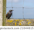 Bird on a fence 21044615