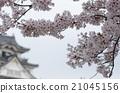 cherry blossom, samurai, kishiwada 21045156