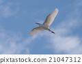 野生鸟类 野鸟 鸟儿 21047312