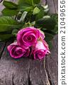 กุหลาบ,ดอกกุหลาบ,สด 21049656