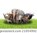 group of asia animals 21054992