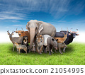 group of asia animals 21054995