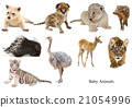 baby animals collection 21054996
