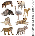 baby animals collection 21054997