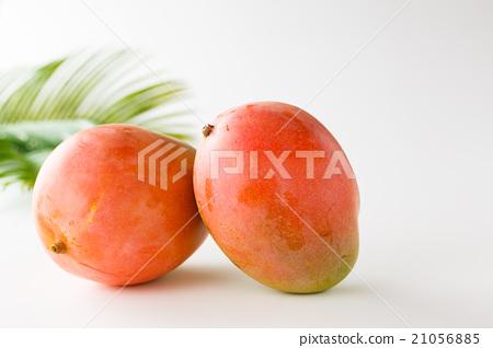 Australia Mango 21056885