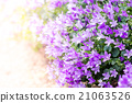 Beautiful spring background with campanula  21063526