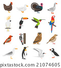 Bird Flat Color Icons Set 21074605