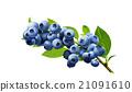 水果 藍莓 果脯 21091610
