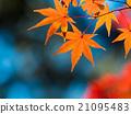 Brilliant autumn leaves 21095483