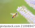 蜜蜂 花盆 盆地 21098947