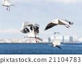 outdoor fly bird 21104783