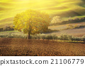 Tuscan fields and trees 21106779