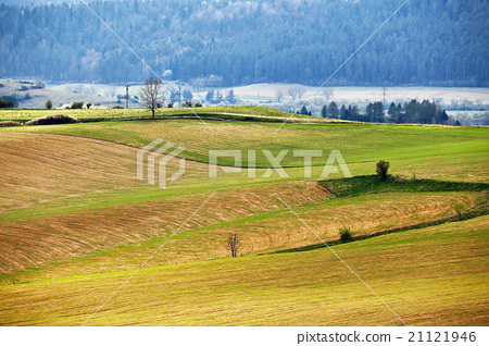 Green spring hills of Slovakia. Sunny countryside 21121946