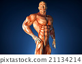 muscle, illustration, muscular 21134214