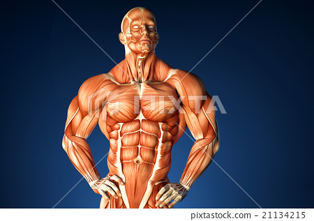 Bodybuilder anatomy. Contains clipping path 21134215