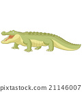 alligator, vector, green 21146007