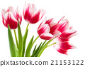 Bouquet of pink tulips. 21153122