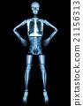 Human bone stand and akimbo  21156313