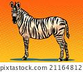 African Zebra animal 21164812