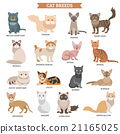 Cat breed set 21165025