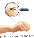 insect, mosquito, magnifier 21165117