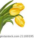 잎, 벡터, 노란색 21169395