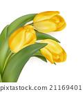 잎, 벡터, 노란색 21169401