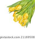 잎, 노란색, 튤립 21169508