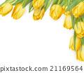 잎, 튤립, 꽃 21169564