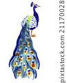 孔雀 鳥兒 鳥 21170028
