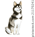 Watercolor illustration of dog husky  21170241