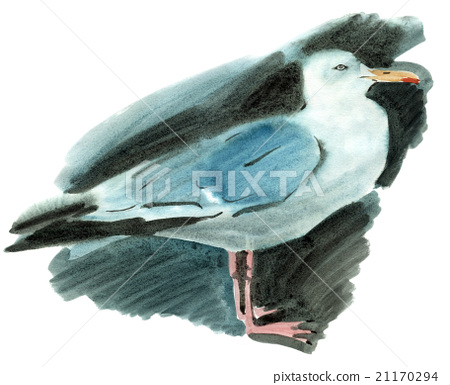 watercolor illustration of a bird Seagull  21170294