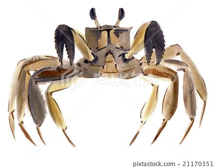 Handwork watercolor illustration of crab 21170351