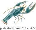 Handwork watercolor illustration of lobster 21170472