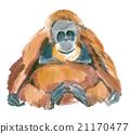 Watercolor illustration of a monkey orangutan 21170477