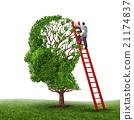 Brain Exam 21174837